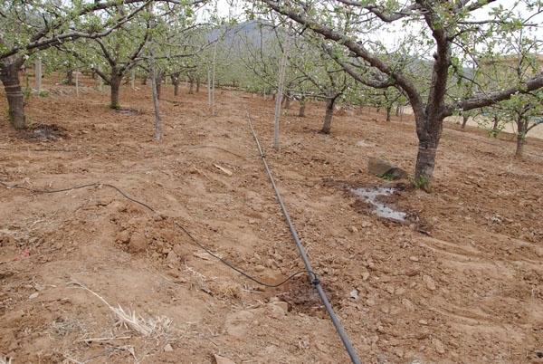 果树滴灌工程